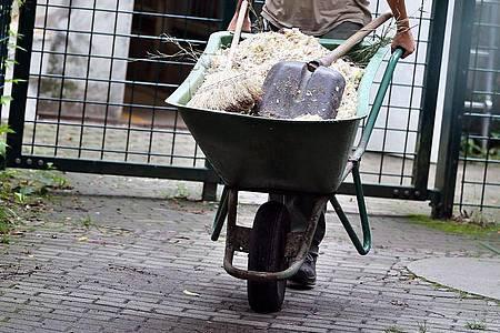 Die Arbeit von Tierpflegern ist auch im Ausland gefragt. Hat ein entsendeter Arbeitnehmer dort einen Unfall, kann es sich trotz Freistellung um einen Arbeitsunfall handeln. Foto: Jan Woitas/dpa-Zentralbild/dpa-tmn