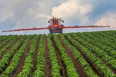 Ein Landwirt spritzt sein Kartoffelfeld mit einem Fungizid gegen Kraut- und Knollenfäule (Phytophthora infestans). Foto: Thomas Warnack/dpa