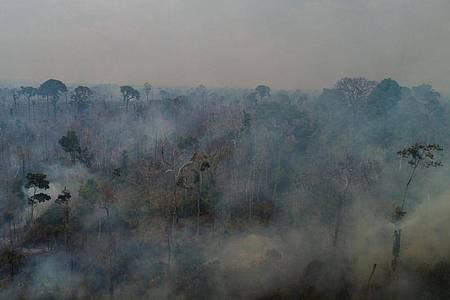 Die meisten Brände im brasilianischen Regenwald werden Experten zufolge gelegt, um Flächen für Landwirtschaft und Viehzucht bereitzustellen. Foto: Fernando Souza/dpa