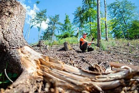 Wie schaut die Hainbuche aus? Als angehender Forstwirt lernt Jesco Ihme auch, Bäume zu begutachten. Foto: Hauke-Christian Dittrich/dpa-tmn