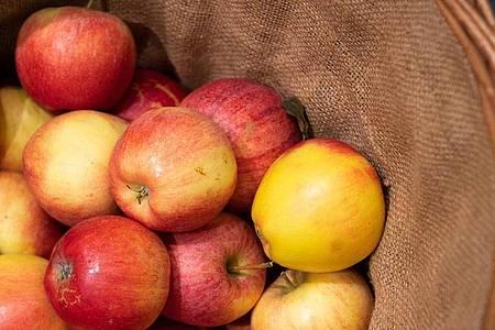 Äpfel mögen es kühl und dunkel - am besten lagern Sie die Früchte im Keller oder im Kühlschrank. Foto: Catherine Waibel/dpa-tmn
