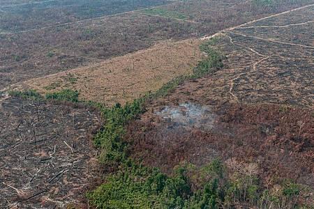 Verbrannte Waldfläche auf einem vom brasilianischen Institut IBAMA zur Verfügung gestellten Archiv-Bild. Foto: Vinícius Mendonça/Ibama/dpa
