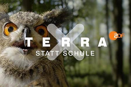 """Ein Ausschnitt aus """"Terra X statt Schule"""". Foto: -/ZDF/HR Geschichte und Wissenschaft/dpa"""