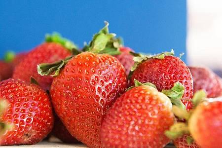Schön aromatisch: Damit das so bleibt, bewahrt man Erdbeeren am besten ungewaschen und mit Blattkelch auf. Foto: Andrea Warnecke/dpa-tmn