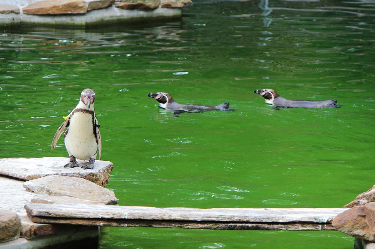 Pinguine_Zoo_OS