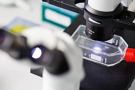 Wie kultiviert man Zellen? Das ist eine der Labortechniken, die Biologielaboranten während ihrer Ausbildung erlernen. Foto: Philipp Von Ditfurth/dpa-tmn