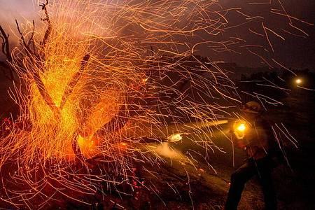 Der Wind weht die Glut von den Bäumen, während ein Feuerwehrmann gegen das Bobcat-Feuer in Los Angeles kämpft. Foto: Ringo Chiu/ZUMA Wire/dpa
