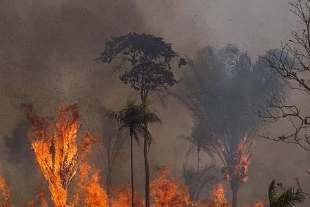 Ein Waldstück im Amazonas-Gebiet steht in Flammen. Foto: Fernando Souza/dpa