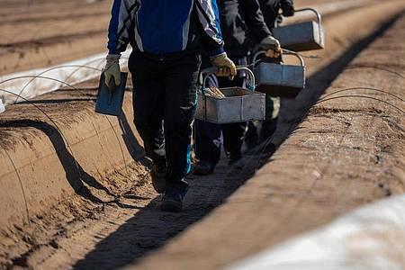 Wegen der Corona-Krise fehlen viele Saisonarbeitskräfte in der Landwirtschaft. Aber auch in anderen Branchen könnten jetzt Kurzarbeiter einspringen. Die Zuverdienstgrenzen wurden daher angehoben. Foto: Andreas Arnold/dpa