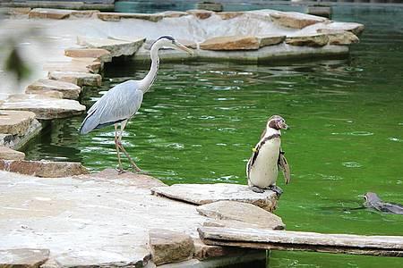 Klugschiss der Woche - Pinguin