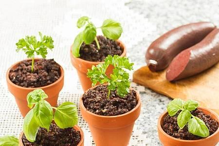 Blutwurst, Kartoffeln und Sauerkraut ist regional auch als «Tote Oma» bekannt. In der Miniatur-Variante gibt es das Gericht im Blumentöpfchen serviert. Foto: Verena Scheidel & Manuel Wassmer/Verlag cook & shoot/dpa-tmn