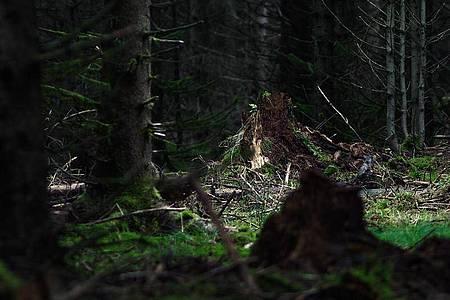 Ein Waldstück nahe Rodacherbrunn, wo im Juli 2016 Skelettteile der vermissten Peggy gefunden worden. Foto: Nicolas Armer/dpa