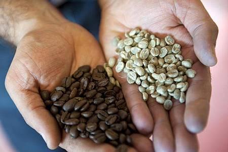 Geröstet und ungeröstet: Wie und wie lange eine Kaffeebohne geröstet wird, ist entscheidend für den Geschmack des Getränks. Foto: Mascha Brichta/dpa-tmn