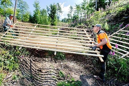 Forstwirte sollten gerne praktisch arbeiten - denn im Wald gibt es immer viel zu tun. Der Auszubildende Jesco Ihme (r.) packt kräftig mit an. Foto: Hauke-Christian Dittrich/dpa-tmn