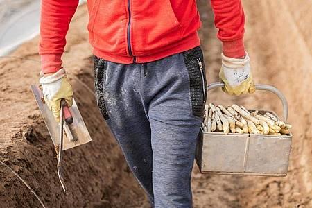 Nicht alle Studentenjobs sind gleichermaßen von der Corona-Krise betroffen. Erntehelfer in der Landwirtschaft etwa werden aktuell gesucht - neben dem Bafög-Antrag sollten Studierende auch diese Möglichkeit prüfen. Foto: Andreas Arnold/dpa/dpa-tmn
