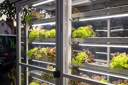 Ein Automat hilft, den Kunden immer knackigen Salat anbieten zu können. Foto: Daniel Karmann/dpa