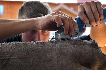 Kuh-Fitter Tobias Guggemos macht Granit schön. Foto: Karl-Josef Hildenbrand/dpa