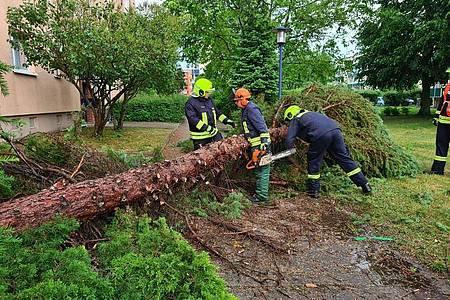 Feuerwehrleute zersägen einen Baum, der bei einem Unwetter im brandenburgischenEberswalde umgestürzt ist. Foto: Julian Stähle/dpa-Zentralbild/ZB