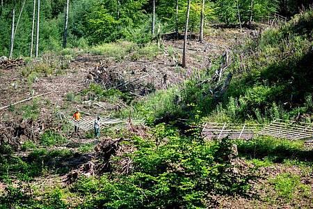 Junge Pflanzen braucht der Wald - darum baut der angehende Forstwirt Jesco Ihme (l.) mit einem Kollegen ein Hordengatter als Schutz für eine neue Baumkultur. Foto: Hauke-Christian Dittrich/dpa-tmn