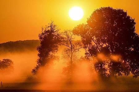 Bodennebel im Licht der aufgehenden Sonne in einem Naturschutzgebiet in Baden-Württemberg. Foto: Thomas Warnack/dpa
