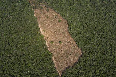 Blick auf ein abgeholztes Waldstück in der Mitte eines Waldgebietes im Amazonasgebiet. Foto: Victor R. Caivano/AP/dpa