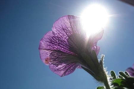 Blick in die Sonne