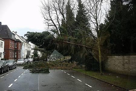 Umgekippter Baum liegt auf einer Straße